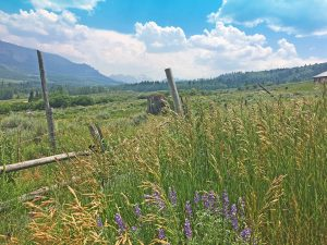 TBD Eagles Rest Dr, Cimarron, CO 81220 - Atha Team Land for Sale