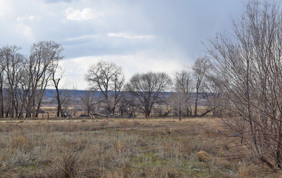 3 Cleared Acres for Sale - Lot 3 Oleander Circle Montrose, CO 81403