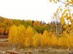 Fall Colors - 58002 Elk Dr Montrose, CO 81403 - Atha Team Realty