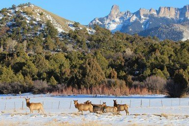Elk Hunting in the Western Slope Colorado - Atha Team Blog