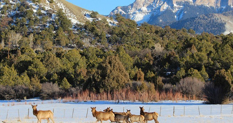 Four of the Best Hunting Options in Colorado