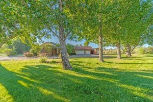 Mature Trees - 59310 Lupine Ct Montrose, CO - Atha Team Real Estate