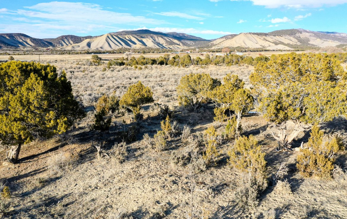 Natural Growth on Land - TBD Buckhorn Rd Montrose, CO 81403 - Atha Team Real Estate Agents