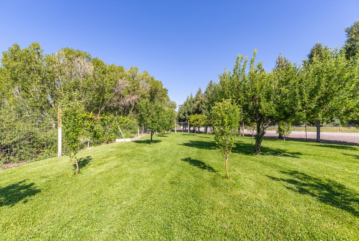 Fruit Trees - 17777 6650 Rd Montrose, CO 81403 - Atha Team Country Real Estate