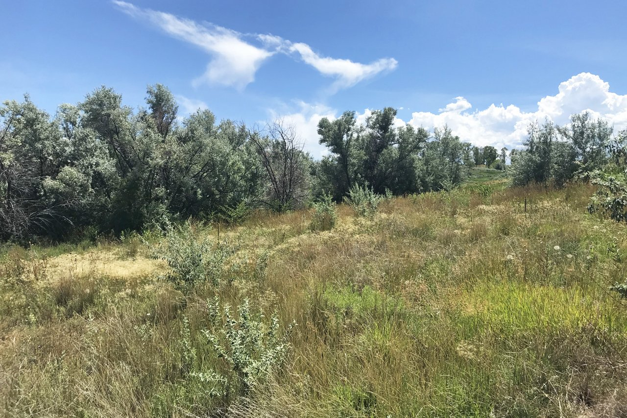 Private Land for Sale - Lot 3 5950 Rd Montrose, CO 81403 - Atha Team Land Real Estate