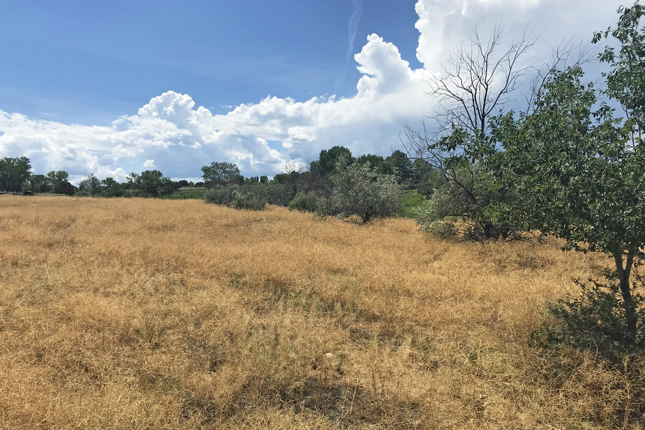 Rolling Land with Trees - Lot 3 5950 Rd Montrose, CO 81403 - Atha Team Land Real Estate