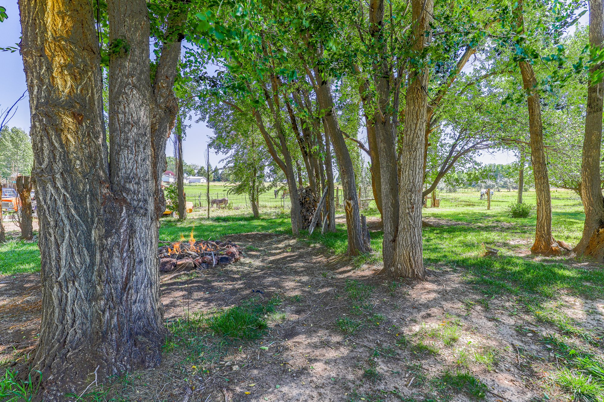 Mature Trees with Irrigation - 60276 Oak Grove Rd Montrose, CO 81403 - Atha Team Real Estate
