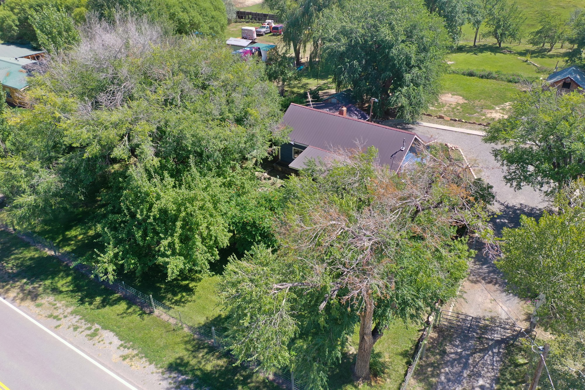 Aerial View of Mature Trees - 60276 Oak Grove Rd Montrose, CO 81403 - Atha Team Real Estate